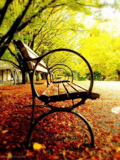 3-amazing-photography-park